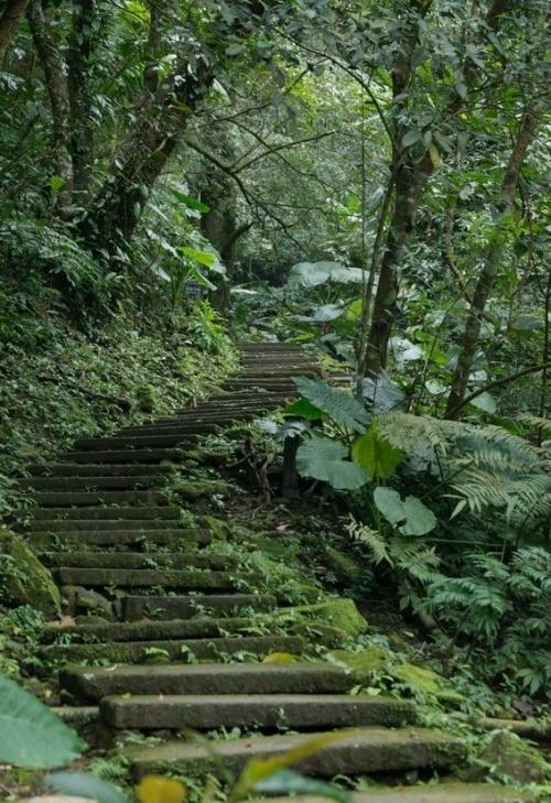 フィトンチッドを存分に! 熱帯雨林の秘境体験