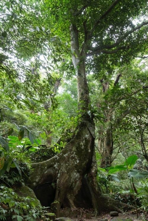 【台湾情報】熱帯雨林で森林浴。美人の湯で温泉浴。亜熱帯流、森ガール体験!その4