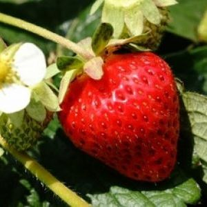 無制限で食べ放題!有機栽培で育った旬の完熟フルーツを思う存分に