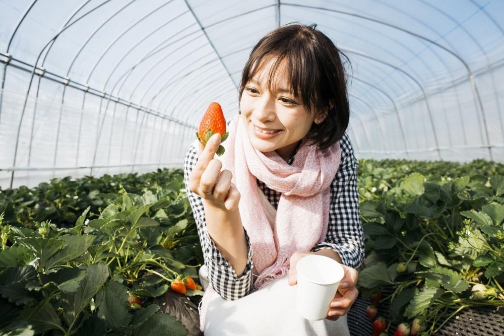 ≪体験レポ≫希少品種イチゴも世界遺産も。旅色☆大使が行く!イチゴ狩りバスツアーその3