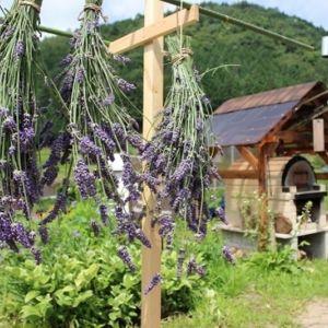 ハーブ収穫と化粧水作り体験!自然に癒される美肌体験プログラム開催その0