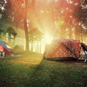 森の美術館で1日キャンプ!「ポーラ美術館」が8月にイベント開催