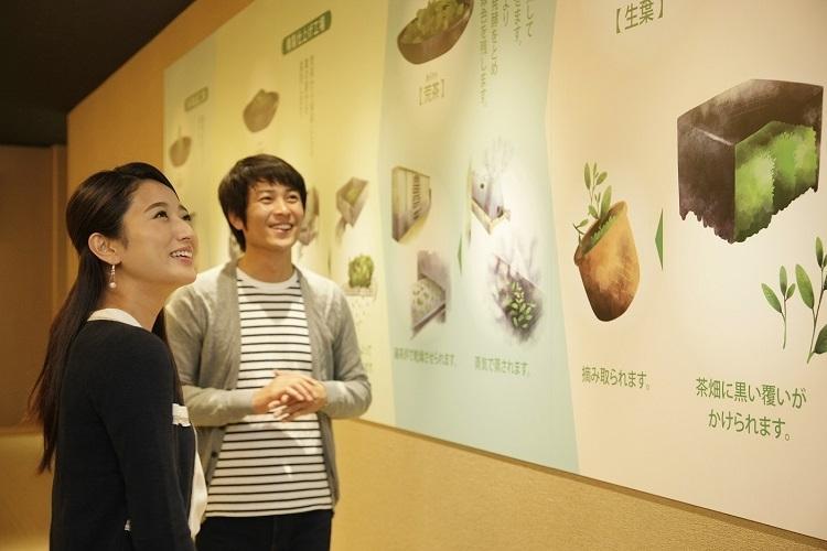 抹茶製品の館内展示&製造工程見学で抹茶ができるまでを詳しく解説!