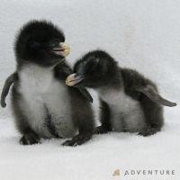ペンギンの赤ちゃん誕生にコラボイルカショー! 今、アドベンチャーワールドがアツい