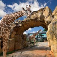 【台湾情報】キリンやシマウマが挨拶に来る!?  人気のサファリホテルに飼育体験プログラムが登場!