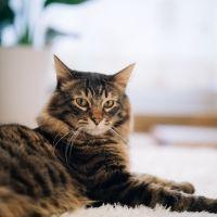 2月22日は猫の日! ペットと宿泊できる宿をご紹介