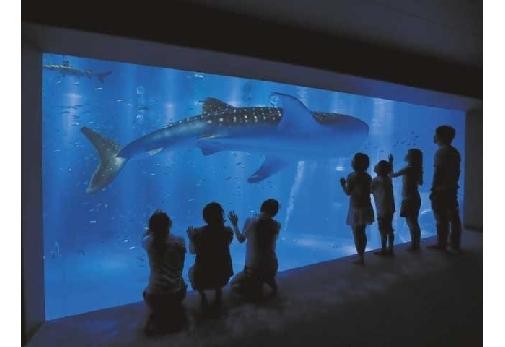 雨の日も楽しめる!石川のベストスポット②のとじま水族館