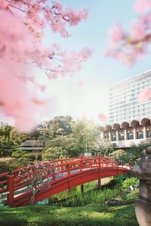 日本庭園を眺めながらのお花見に