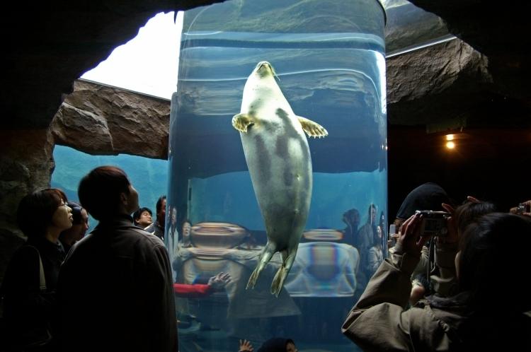 ①水族館を超える! 斬新な水族館化で超人気に「旭山動物園」(北海道)
