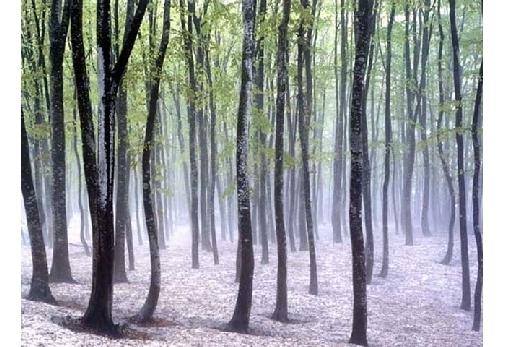 美人林の名前の由来