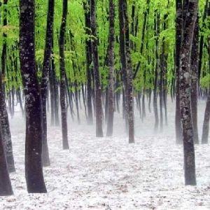 新潟県にブナの楽園があった。写真愛好家が訪れる「美人林」が神秘的その0