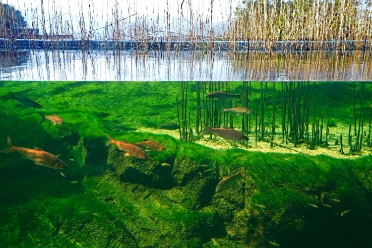 ①琵琶湖にこだわる日本最大級の淡水水族館「琵琶湖博物館」(滋賀県)