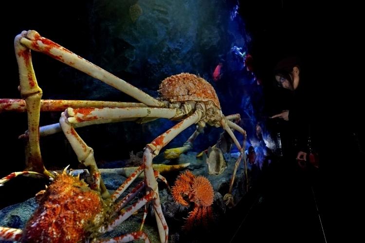 ②スタッフの思いがあふれる展示と解説「竹島水族館」(愛知県)
