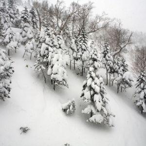温泉とスキーが同時に楽しめる!群馬県「草津国際スキー場」の魅力