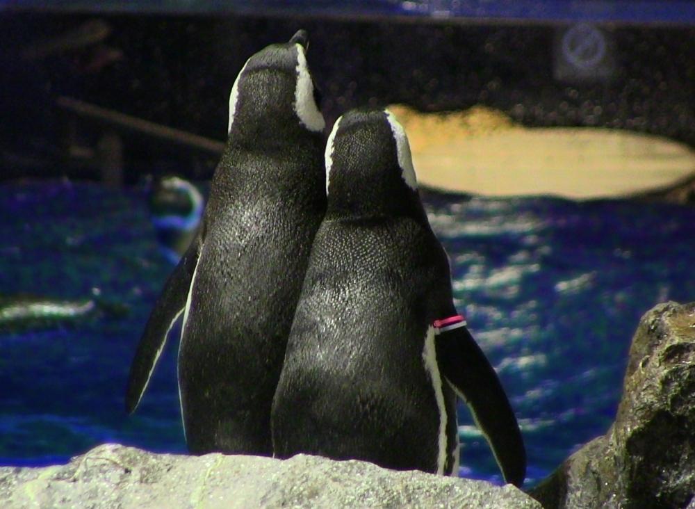 「スイートペンギントーク」を開催