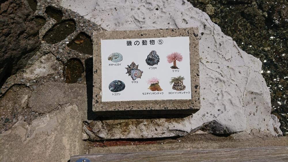 高岡早紀さんが見つけた幻想的な風景とは?日本の原風景が残る奥能登の旅へその3