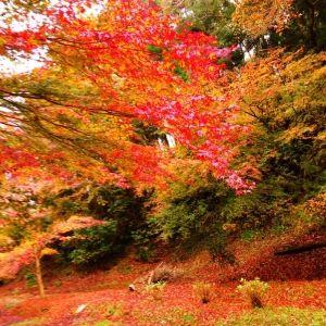 【旅色アンバサダー通信】インスタ映えする紅葉スポットを教えてもらいました!~関東編~