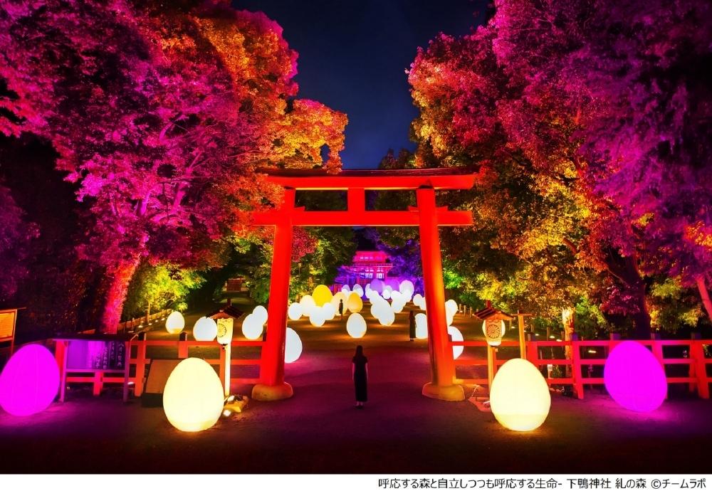 【下鴨神社】下鴨神社 糺の森の光の祭 Art by teamLab - TOKIO インカラミ