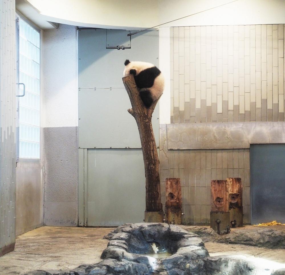 上野動物園のシャンシャンがかわいすぎ! 旅作家・とまこが体感した観覧タイミングとおすすめパンダグッズ、カフェ【連載第29回】その2