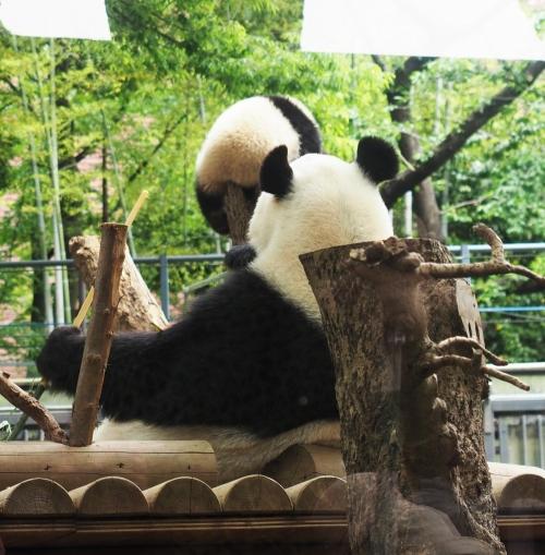 上野動物園のシャンシャンがかわいすぎ! 旅作家・とまこが体感した観覧タイミングとおすすめパンダグッズ、カフェ【連載第29回】その4