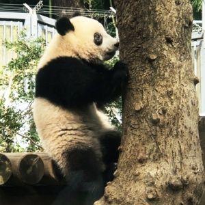 上野動物園のシャンシャンがかわいすぎ! 旅作家・とまこが体感した観覧タイミングとおすすめパンダグッズ、カフェ【連載第29回】