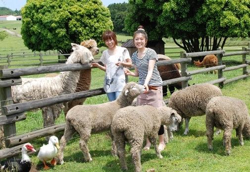 【千葉県】帰りは動物たちとのふれあいも「マザー牧場」