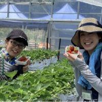【兵庫】夏にいちご狩り? 六甲山カンツリーハウスで体験農園