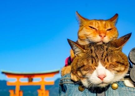 大丸東京店で開催中! だいにゃる猫の写真展