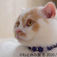 【東京】2月22日は猫の日!猫まみれなイベントに行こう