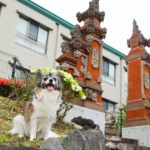 愛犬と一緒にお泊まり。今週末は温泉リゾート「愛犬お宿 伊豆高原」でのんびり過ごす