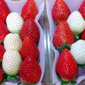 【渋谷】暗闇でいちごいちえ! 栃木が誇るいちご3種を食べ比べ!