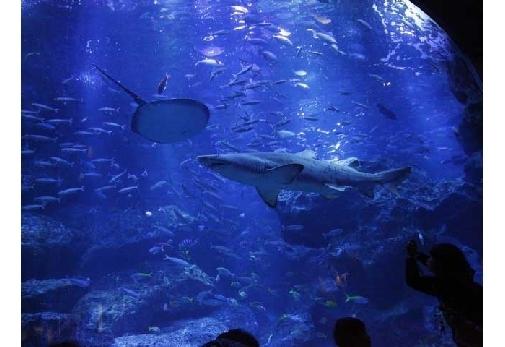 雨の日の東京を楽しもう!おすすめの屋内スポット④すみだ水族館