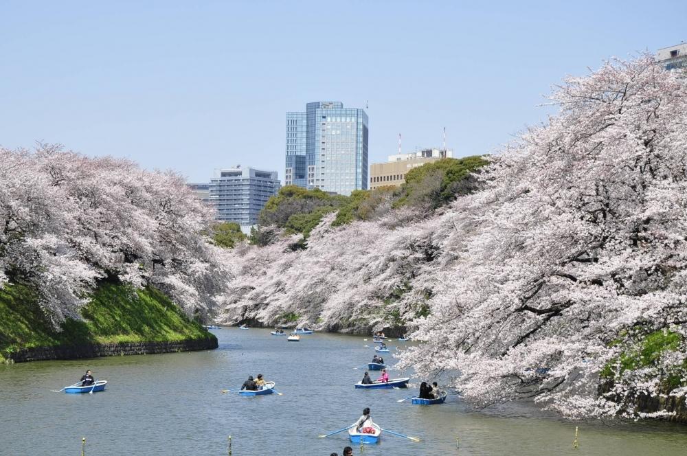 都内有数の桜の名所「千鳥ヶ淵緑道・千鳥ヶ淵公園」