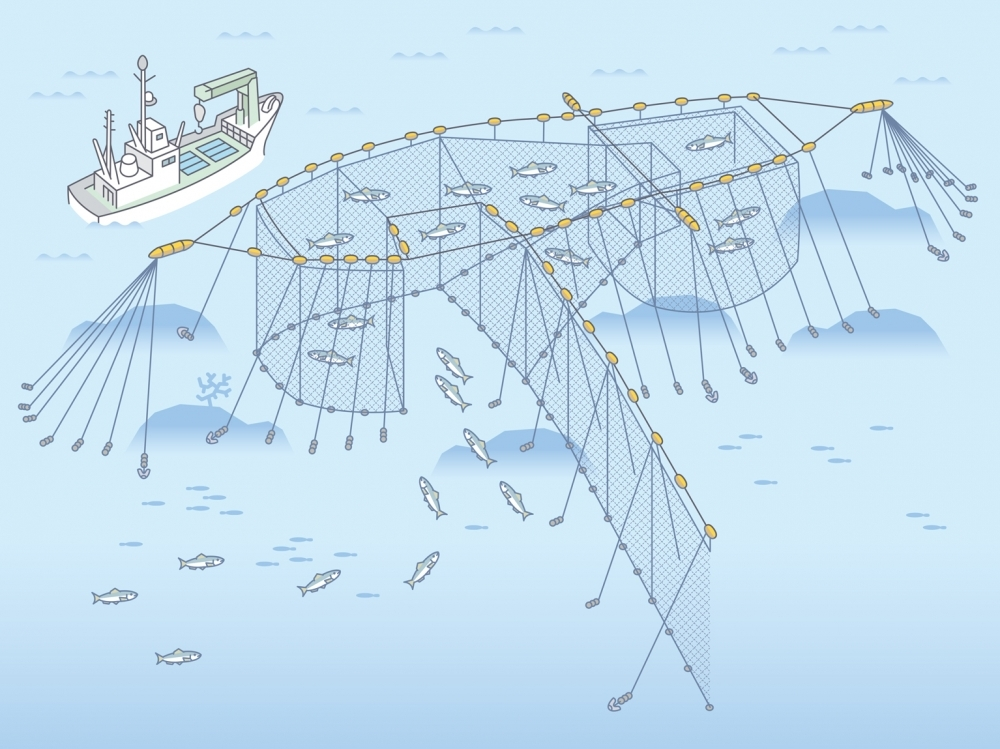 能登半島の定置網漁