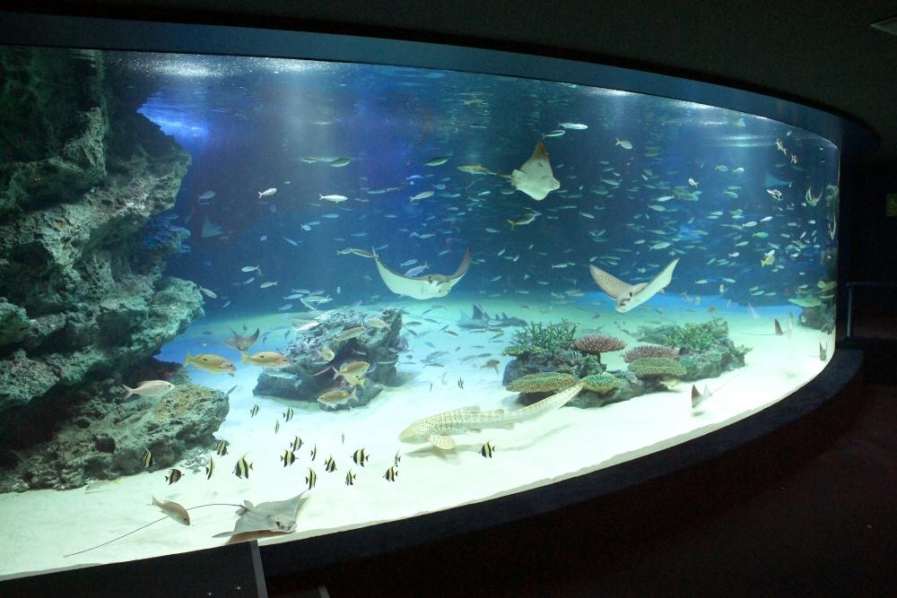 海の中の水族館ヨガ!「サンシャイン水族館」で女性限定イベント開催その2
