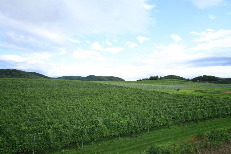 ひとり旅におすすめ「北海道余市町」美味を巡る1泊2日の旅その2
