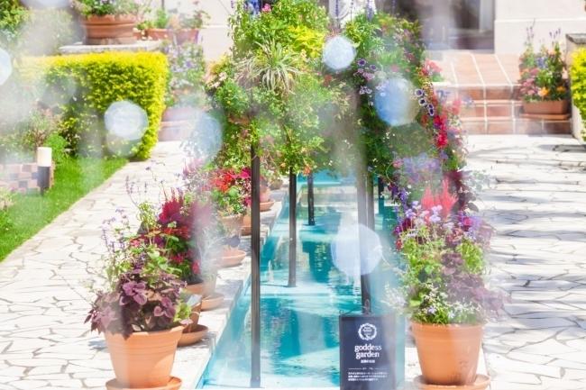 美しい中庭に癒される「パティオフラワーフェスティバル」
