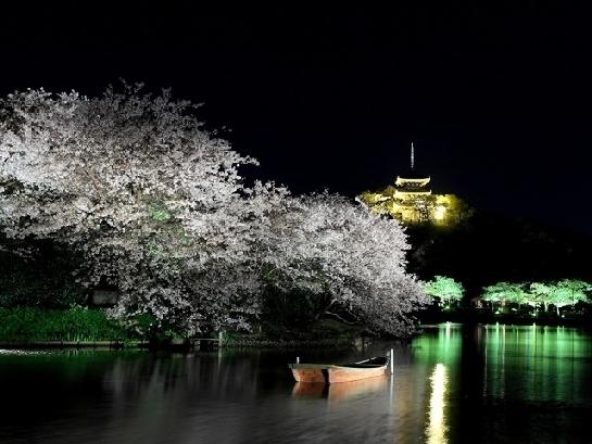 神奈川のおすすめの桜の名所②三溪園