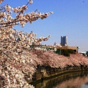 【2017年のお花見・名所をチェック】神奈川県のおすすめスポット