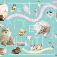 2月22日はねこの日。もふもふの猫に癒される「ねこ休み展」浅草橋で開催!