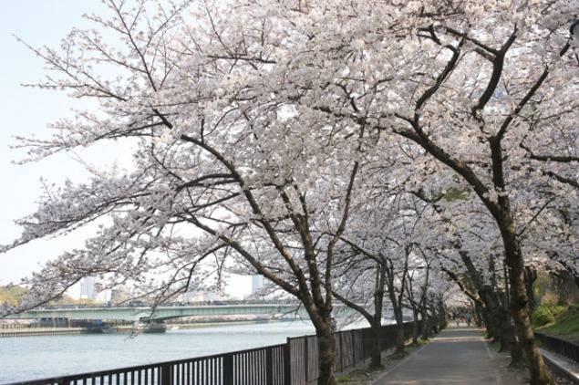 ゆったり散歩しながらお花見を楽しめるスポット by高橋沙苗さん(大阪)