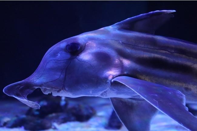 ゾクゾク深海生物2021/サンシャイン水族館