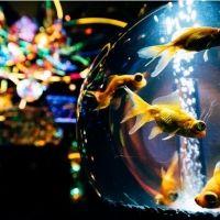 イルミネーションに深海生物鍋まで! 冬は水族館が面白い