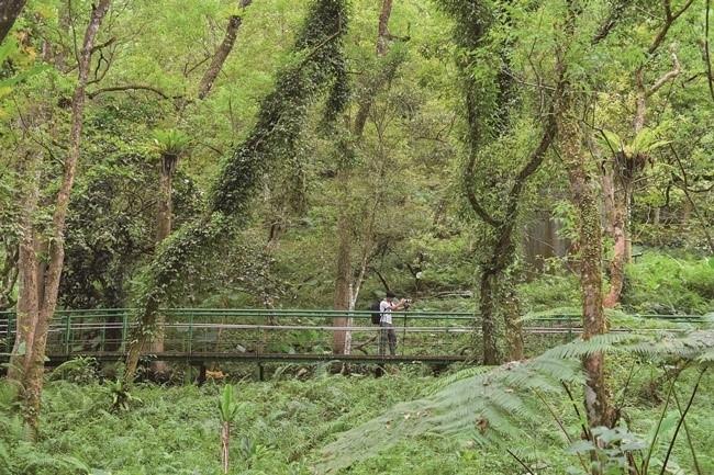 シダ植物や蔓植物が茂る山林は「大樹のアパート」との異名も。