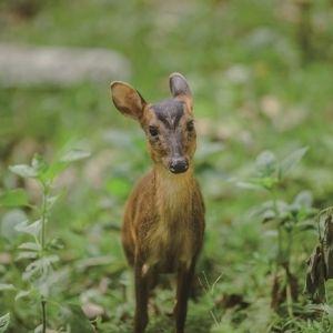 【台湾情報】動物たちとの出合いも!? 行楽の秋は、國家森林遊 樂區のトレッキングコースへその0