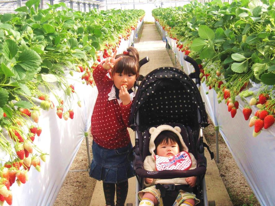 ⑧新品種など、運が良ければ食べ比べもできるかも?「苺や本舗」