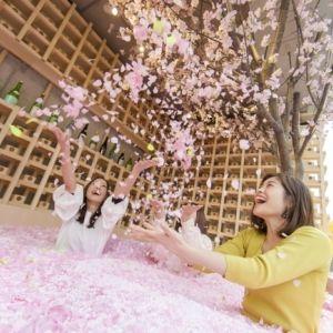 120万枚の桜の花びらに埋もれて日本酒でほろ酔い。表参道で体験型インドア花見その0