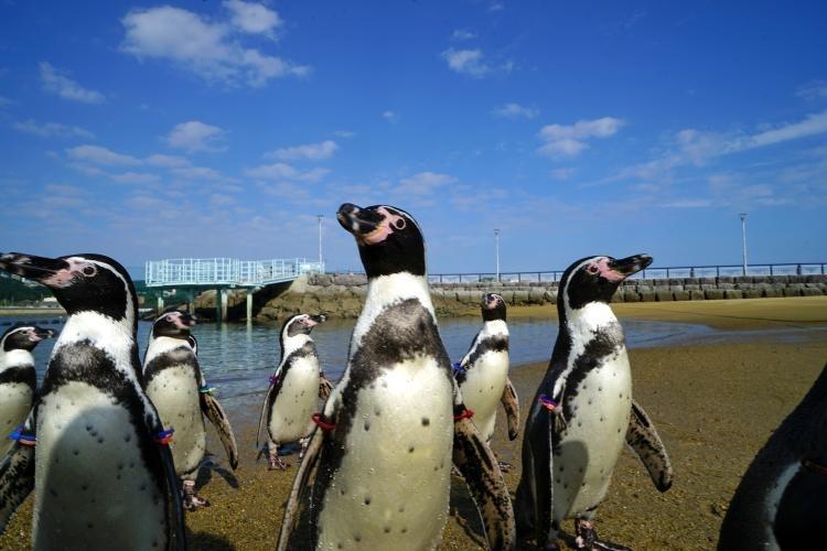 ②ペンギンの種類世界一を誇る「長崎ペンギン水族館」(長崎県)