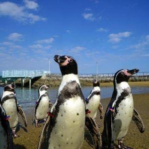 ペンギン好き必見! 水族館プロデューサー・中村元さんが選ぶとっておきの展示5選