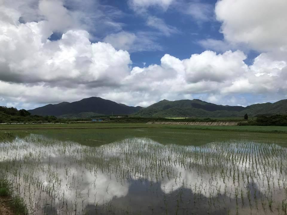 ③本州で最も早い新米「沖縄県石垣島」